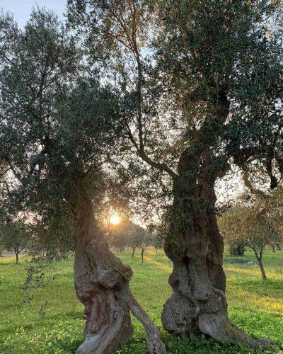 Masseria-Storica-Pilapalucci-Home1